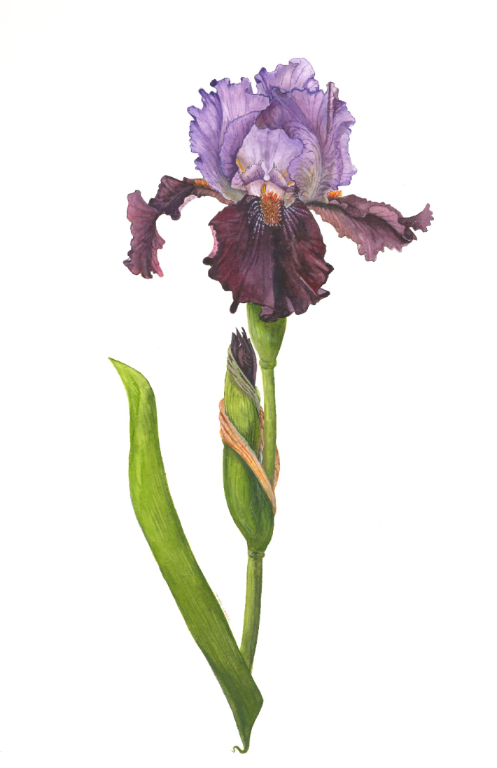 Botanical Art David Reynolds
